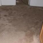carpet cleaners in salt lake city utah